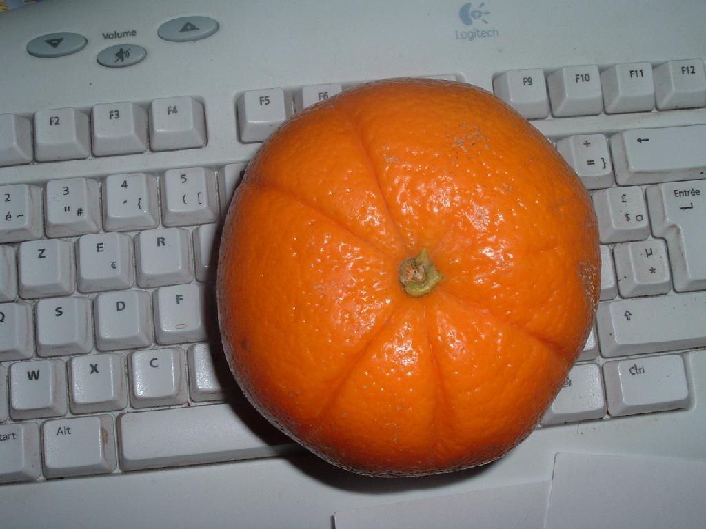 orange geante les orangers doux et amers bigaradiers. Black Bedroom Furniture Sets. Home Design Ideas